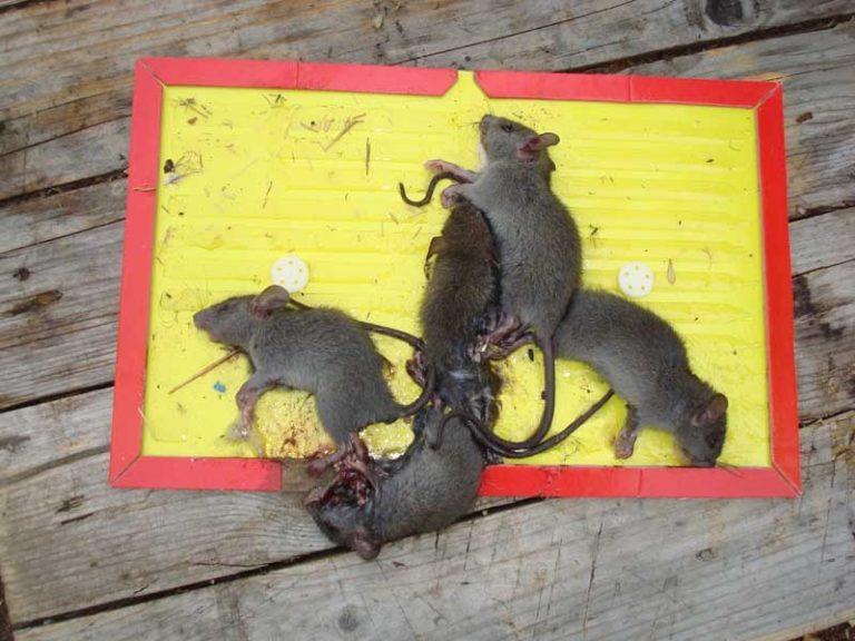 избавиться от мышей