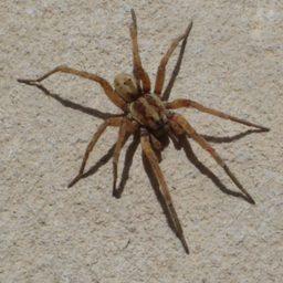 Уничтожение пауков в Набережных Челнах
